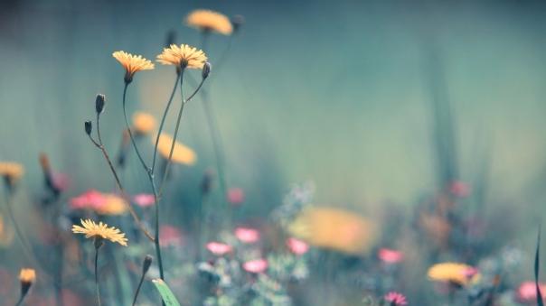 flowers_field_plant_90273_1920x1080